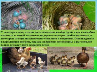 У некоторых птиц, птенцы после появления из яйца одеты в пух и способны следо