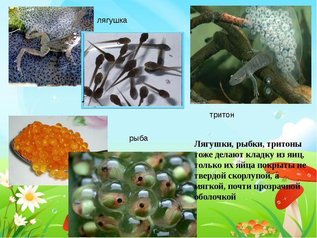 лягушка тритон рыба Лягушки, рыбки, тритоны тоже делают кладку из яиц, только...