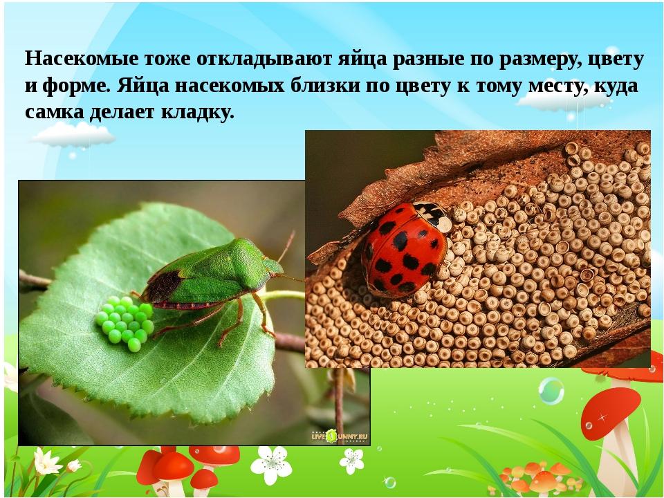 Насекомые тоже откладывают яйца разные по размеру, цвету и форме. Яйца насеко...
