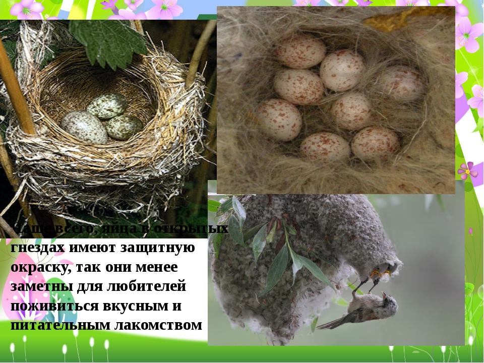 Чаще всего, яйца в открытых гнездах имеют защитную окраску, так они менее зам...