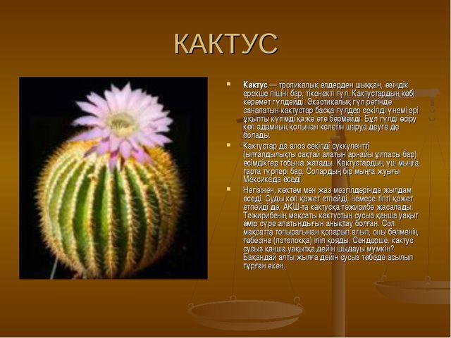 КАКТУС Кактус — тропикалық елдерден шыққан, өзіндік ерекше пішіні бар, тікене...