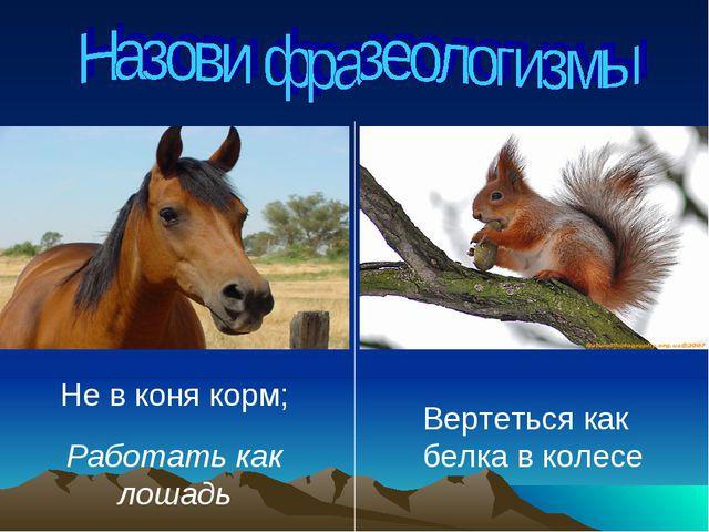 Не в коня корм; Работать как лошадь Вертеться как белка в колесе