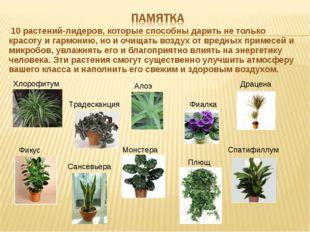 10 растений-лидеров, которые способны дарить не только красоту и гармонию, н