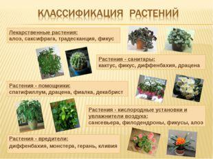 Растения - вредители: диффенбахия, монстера, герань, кливия Лекарственные рас