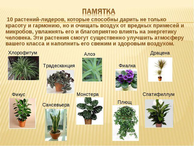 10 растений-лидеров, которые способны дарить не только красоту и гармонию, н...