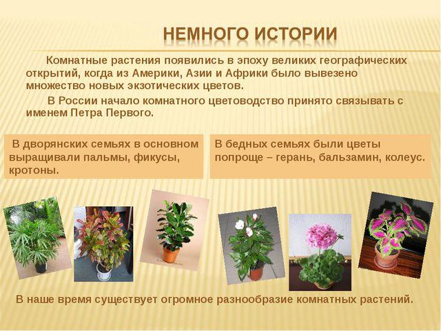 Комнатные растения появились в эпоху великих географических открытий, когда...