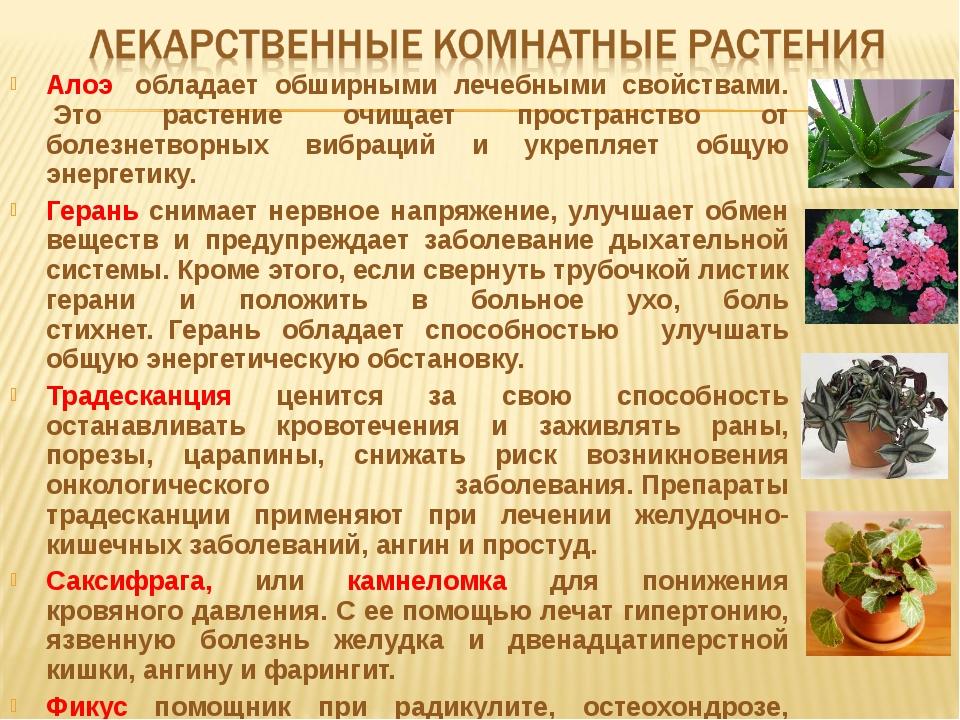 Алоэ обладает обширными лечебными свойствами. Это растение очищает простран...
