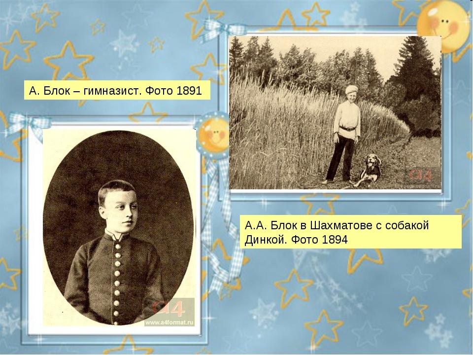 А.А. Блок в Шахматове с собакой Динкой. Фото 1894 А. Блок – гимназист. Фото 1...