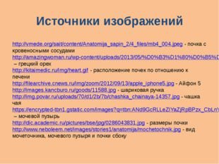 Источники изображений http://vmede.org/sait/content/Anatomija_sapin_2/4_files