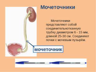 Мочеточники Мочеточники представляют собой соединительнотканную трубку диаме
