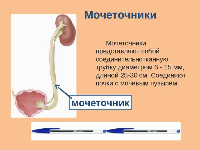 Мочеточники Мочеточники представляют собой соединительнотканную трубку диаме...