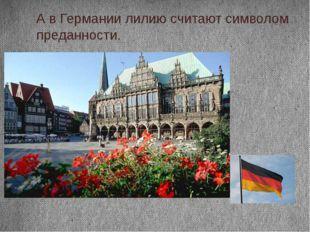 А в Германии лилию считают символом преданности.