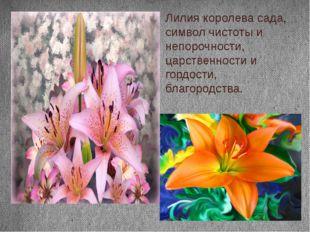 Лилия королева сада, символ чистоты и непорочности, царственности и гордости,