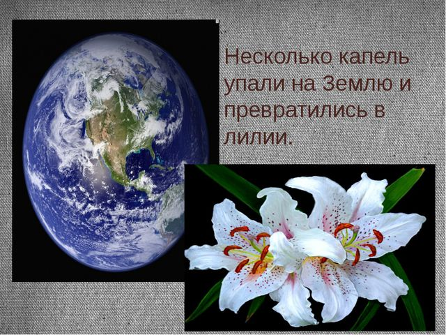 Несколько капель упали на Землю и превратились в лилии.