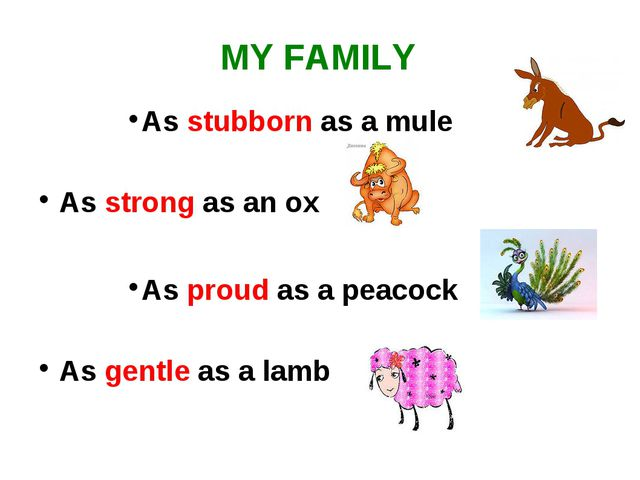 MY FAMILY As stubborn as a mule As strong as an ox As proud as a peacock As g...