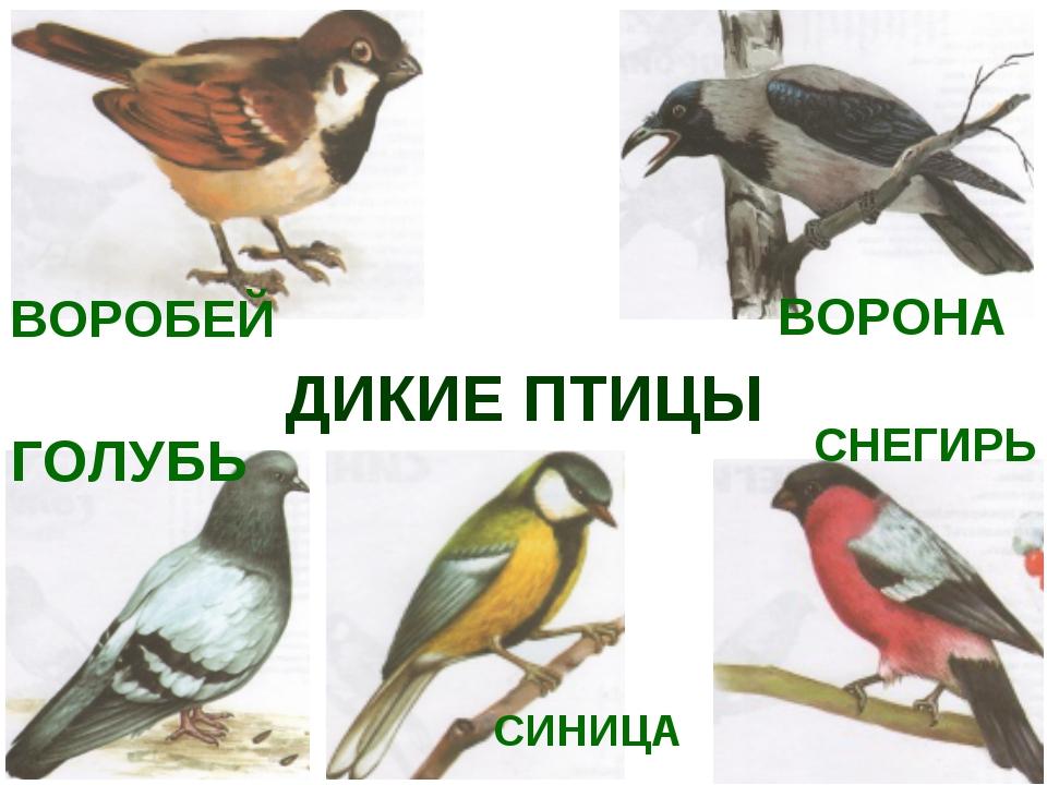 картинки вороны воробья голубя дятла синицы снегиря будут
