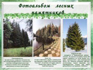 Фотоальбом лесных памятников Рукотворный лес Арский лесхоз, Сунарское лесниче