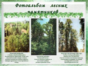 Фотоальбом лесных памятников Казанский дендрарий. г. Казань, Вахитовский райо