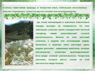 Степных памятников природы в Татарстане мало. Небольшие естественные участки