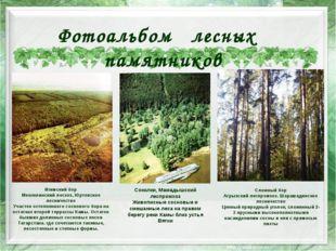 Игимский бор Мензелинский лесхоз, Юртовское лесничество Участок остепненного