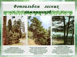 Горный сосняк Верхнеуслонский район, Приволжский лесхоз Участок горного сосн