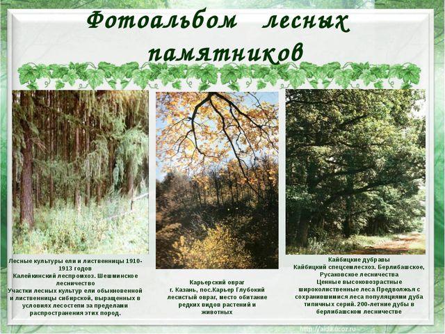 Фотоальбом лесных памятников Лесные культуры ели и лиственницы 1910-1913 годо...