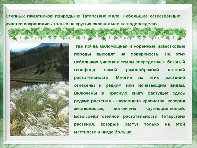Степных памятников природы в Татарстане мало. Небольшие естественные участки...