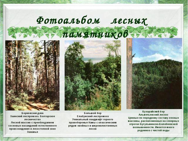 Борковская дача Заинский леспромхоз. Болгарское лесничество Лесной массив с...