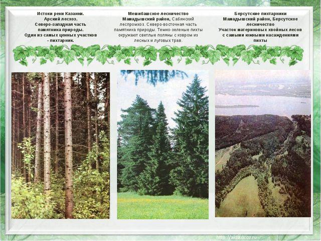 Истоки реки Казанки. Арский лесхоз. Северо-западная часть памятника природы....