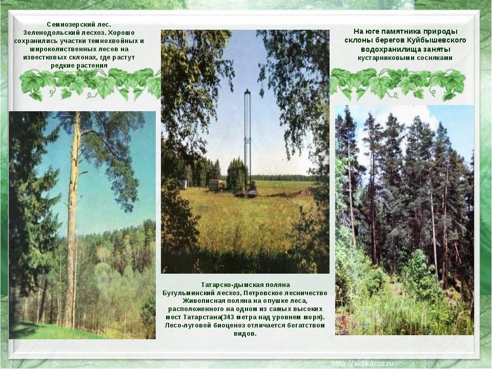 Татарско-дымская поляна Бугульминский лесхоз, Петровское лесничество Живопис...