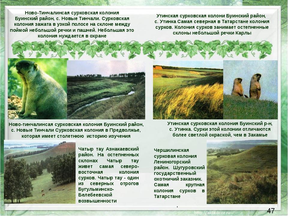 Ново-тинчалинсая сурковская колония Буинский район, с. Новые Тинчали Сурковс...