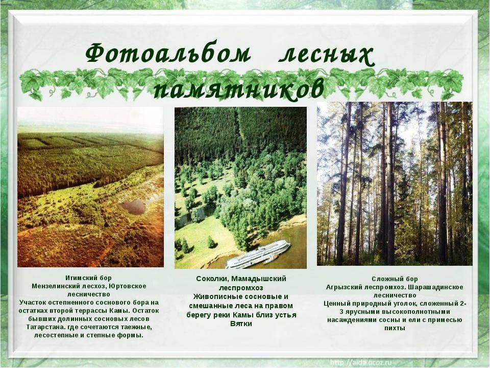 Игимский бор Мензелинский лесхоз, Юртовское лесничество Участок остепненного...