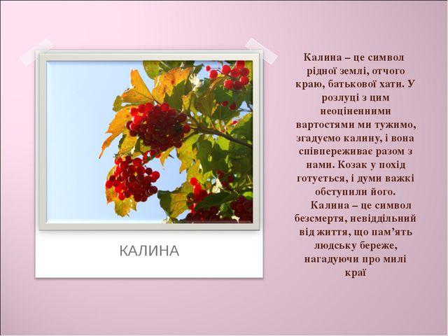 Калина – це символ рідної землі, отчого краю, батькової хати. У розлуці з цим...