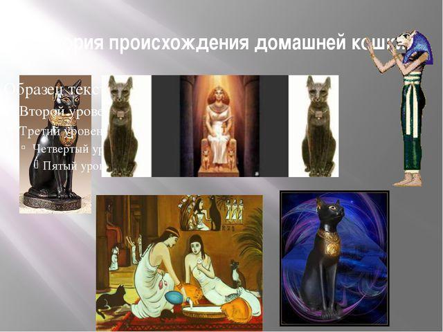История происхождения домашней кошки