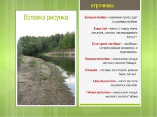 агронимы Большая поляна – название происходит от размера поляны. Капустник –
