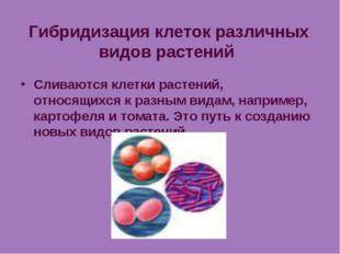 Гибридизация клеток различных видов растений Сливаются клетки растений, относ