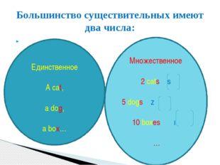 Большинство существительных имеют два числа: Единственное A cat, a dog, a bo
