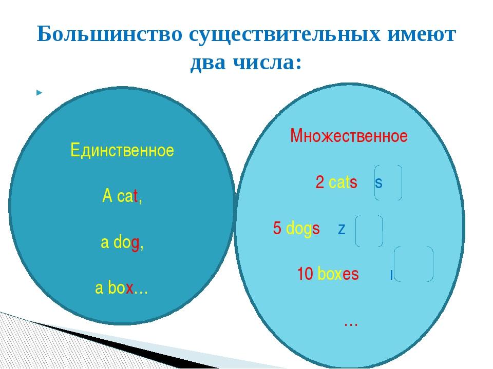 Большинство существительных имеют два числа: Единственное A cat, a dog, a bo...