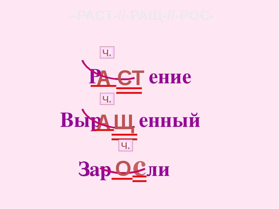 –РАСТ-//-РАЩ-//-РОС- Р ение А Ч. СТ Выр енный А Ч. Щ Зар сли О Ч.