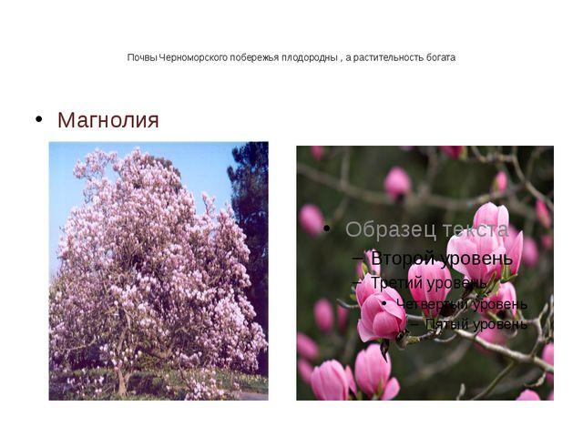 Почвы Черноморского побережья плодородны , а растительность богата Магнолия