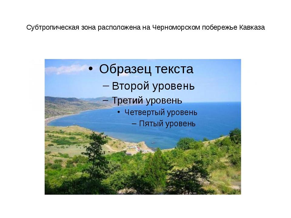 Субтропическая зона расположена на Черноморском побережье Кавказа