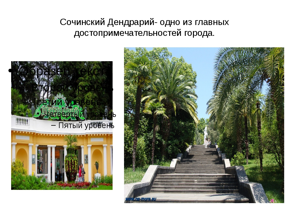 Сочинский Дендрарий- одно из главных достопримечательностей города.