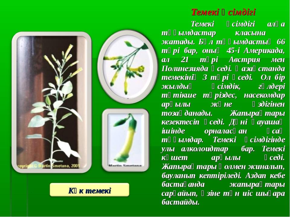 Темекі өсімдігі Темекі өсімдігі алқа тұқымдастар класына жатады. Бұл тұқымда...