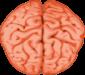 C:\Users\Vento\Desktop\мультимедиа урок\ОМ\НОВОЕ\мозг2.png