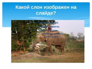 Какой слон изображен на слайде? 22 сентября – Всемирный день защиты слонов.
