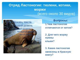 Отряд Ластоногие: тюлени, котики, моржи (всего около 30 видов) Вопросы: 1.Чем