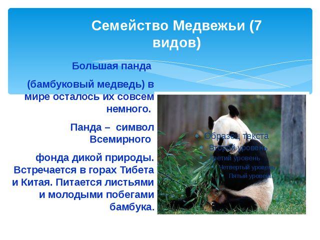 Семейство Медвежьи (7 видов) Большая панда (бамбуковый медведь) в мире остало...