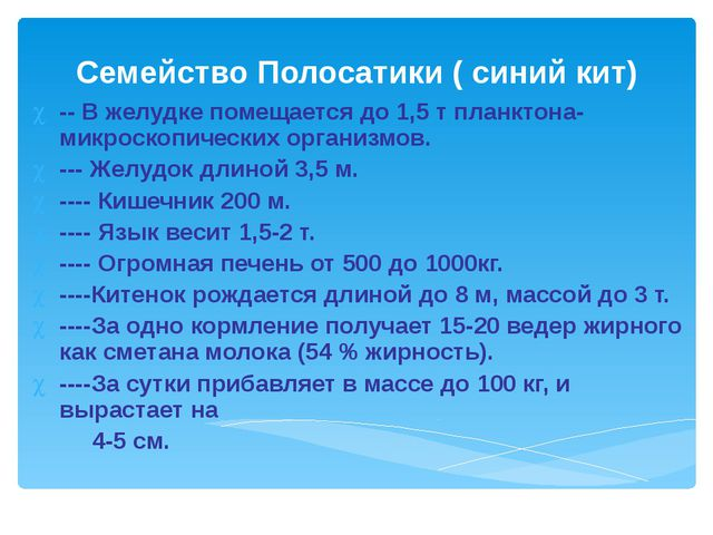 Семейство Полосатики ( синий кит) -- В желудке помещается до 1,5 т планктона-...