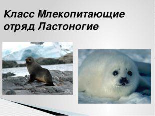 Класс Млекопитающие отряд Ластоногие