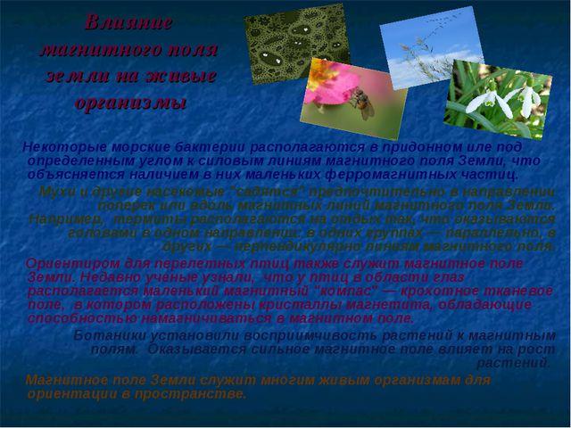 Влияние магнитного поля земли на живые организмы Некоторые морские бактерии р...